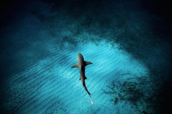 underwater-1-560x372