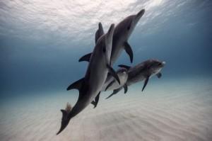 underwater-10-560x372