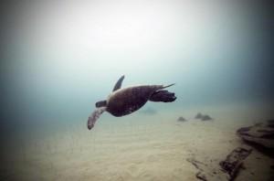 underwater-13-560x371