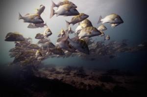 underwater-6-560x373